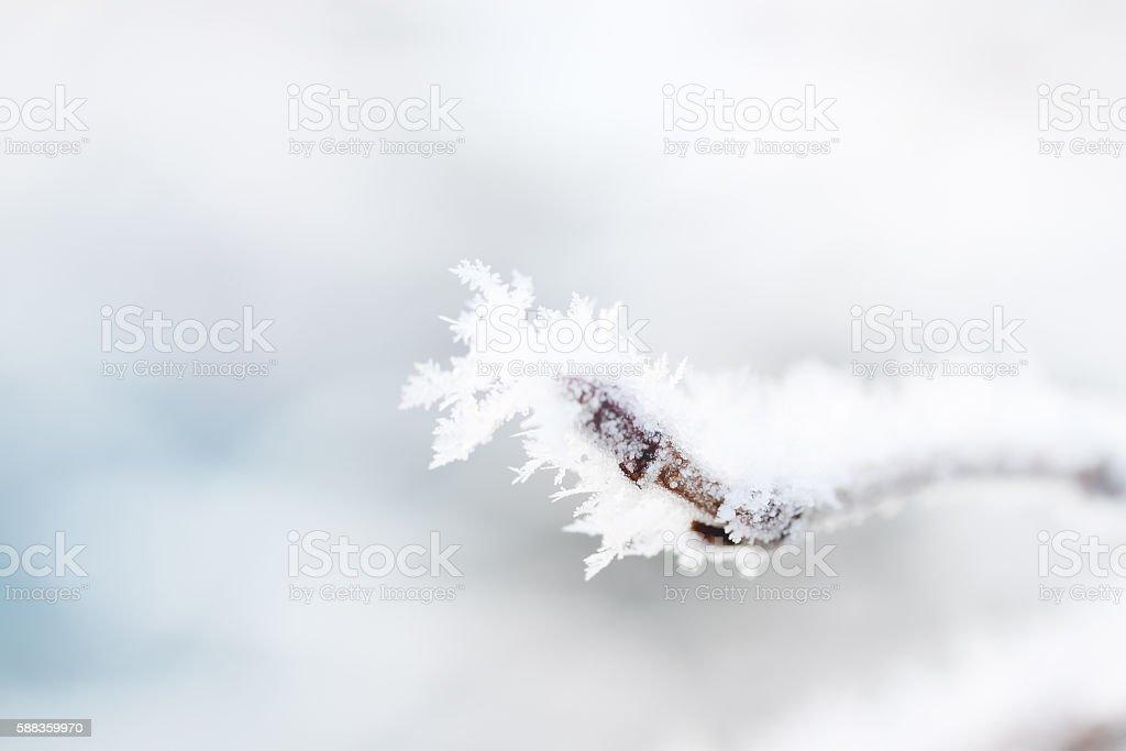 Frosty iny on a tree branch stock photo