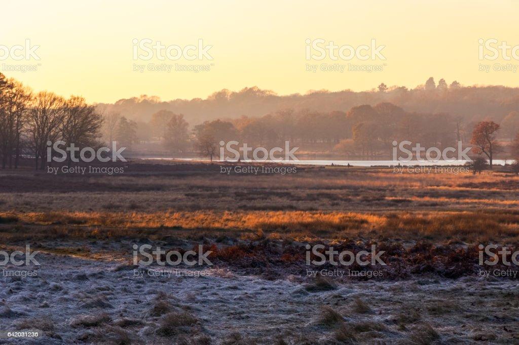 Frosty landscape in Richmond Park stock photo