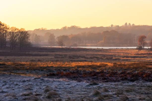 frosty landscape in richmond park - richmond park stock photos and pictures