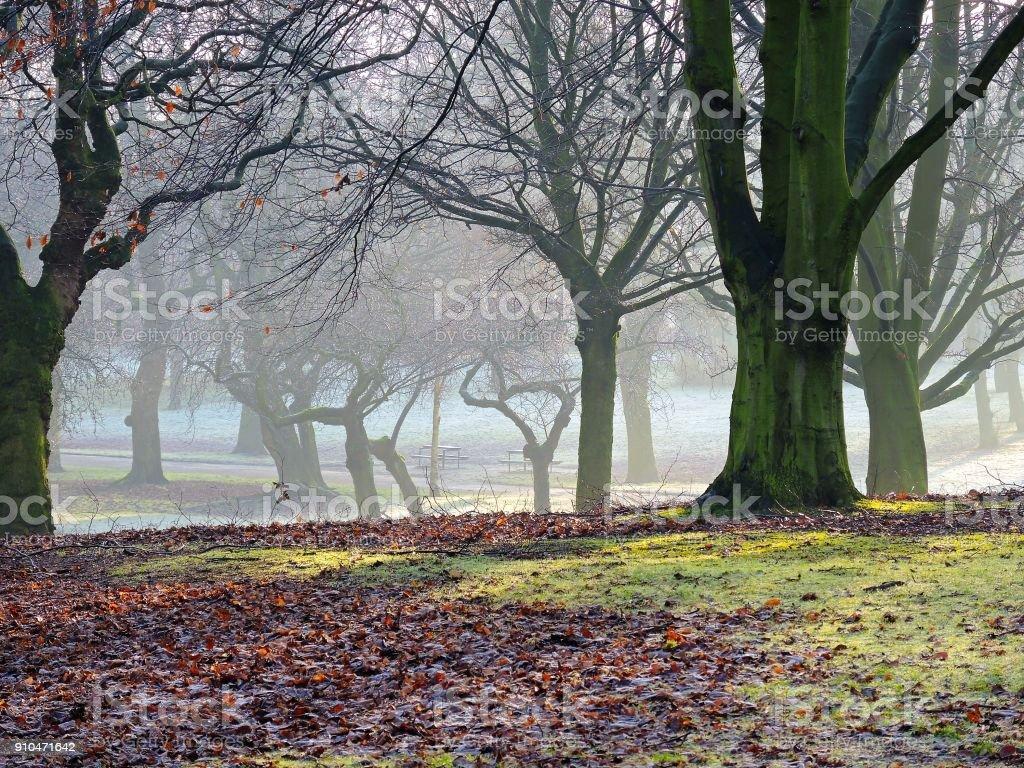 Frostige Landschaft. – Foto