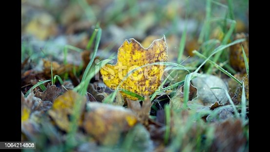 istock Frosty Leaves in the Grass 1064214808
