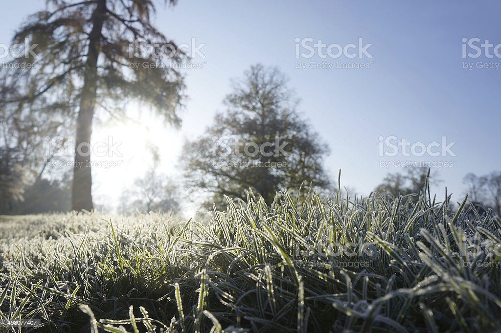 Frosty morning in a park royalty-free stock photo