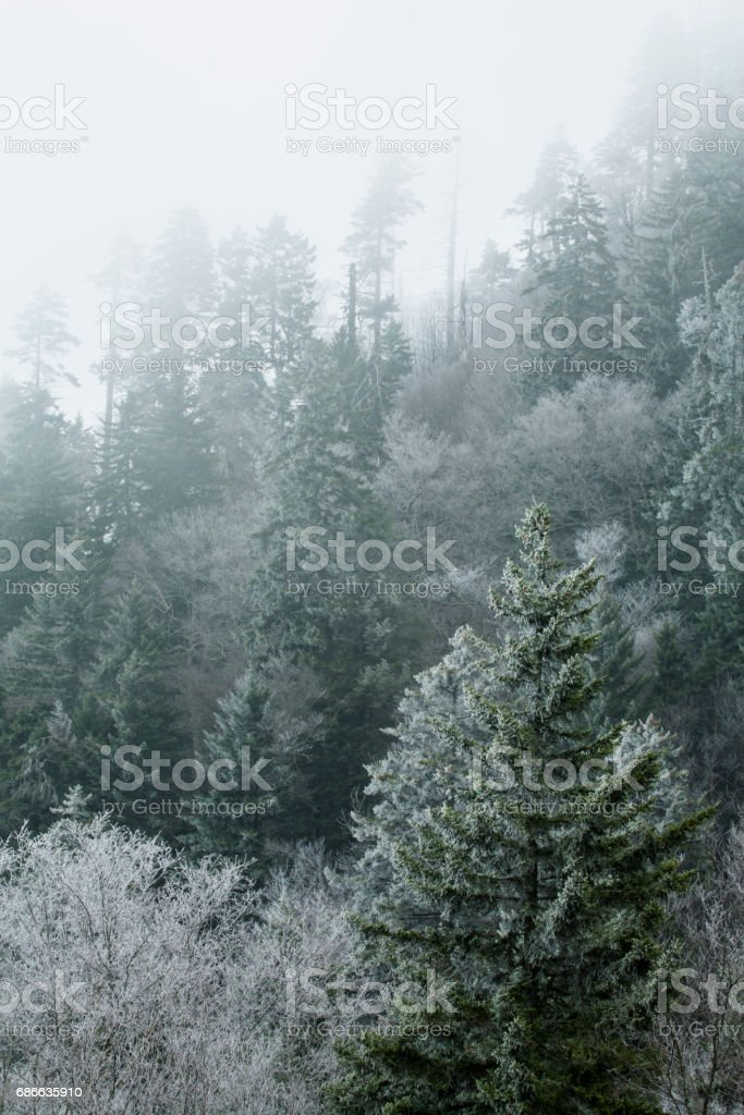Frosty Morning on Newfound Gap Road, Great Smoky Mountains NP stock photo