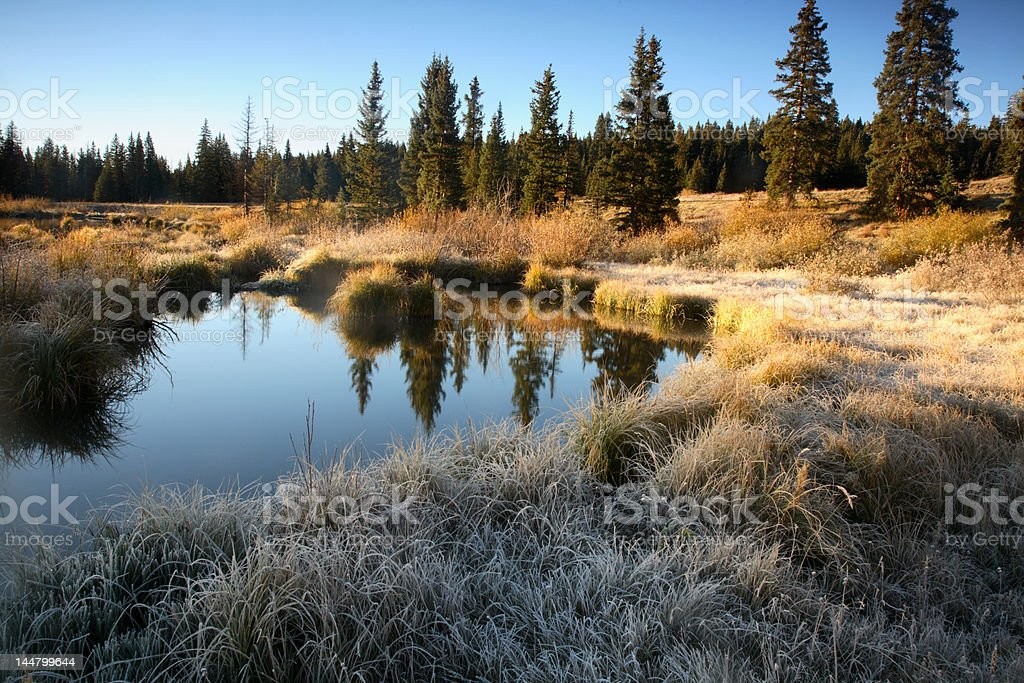 Frosty Morning stock photo