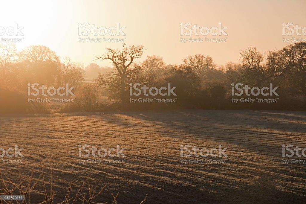 Frosty Morning Sunrise Glow royalty-free stock photo
