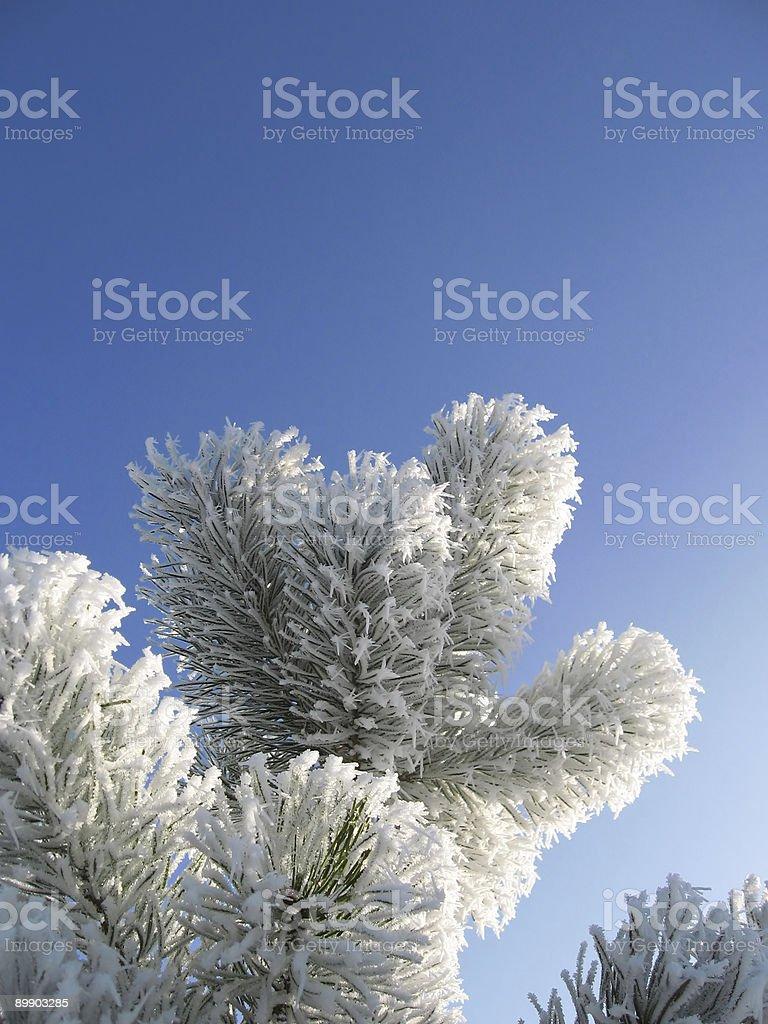 Agujas congelada foto de stock libre de derechos
