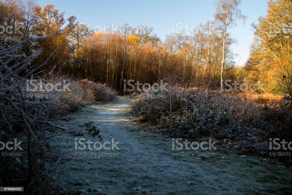Frosty Path stock photo