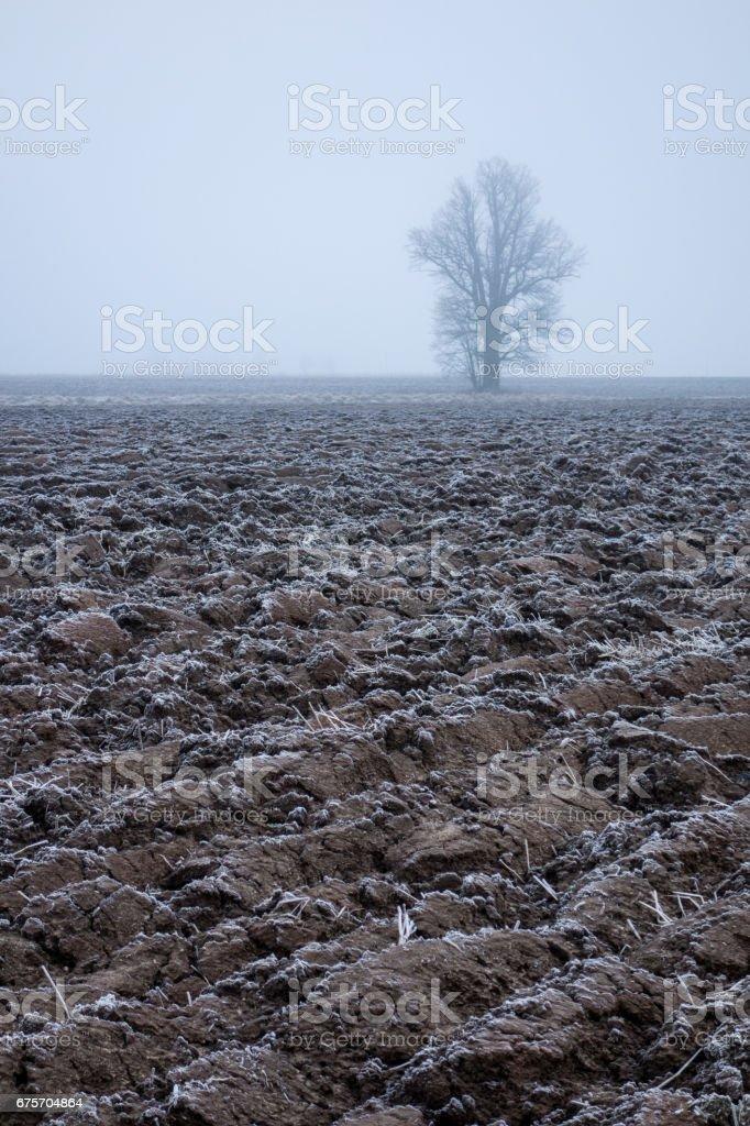 霜犁過的田野和孤獨的樹,在霧中。 免版稅 stock photo
