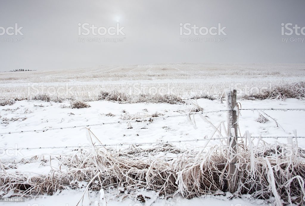 Frosty Post and Barbed Wire royalty-free stock photo
