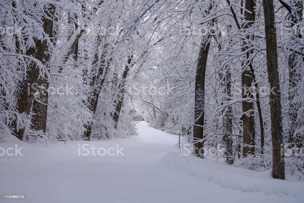 Frosty Trail in the Deep Woods stock photo