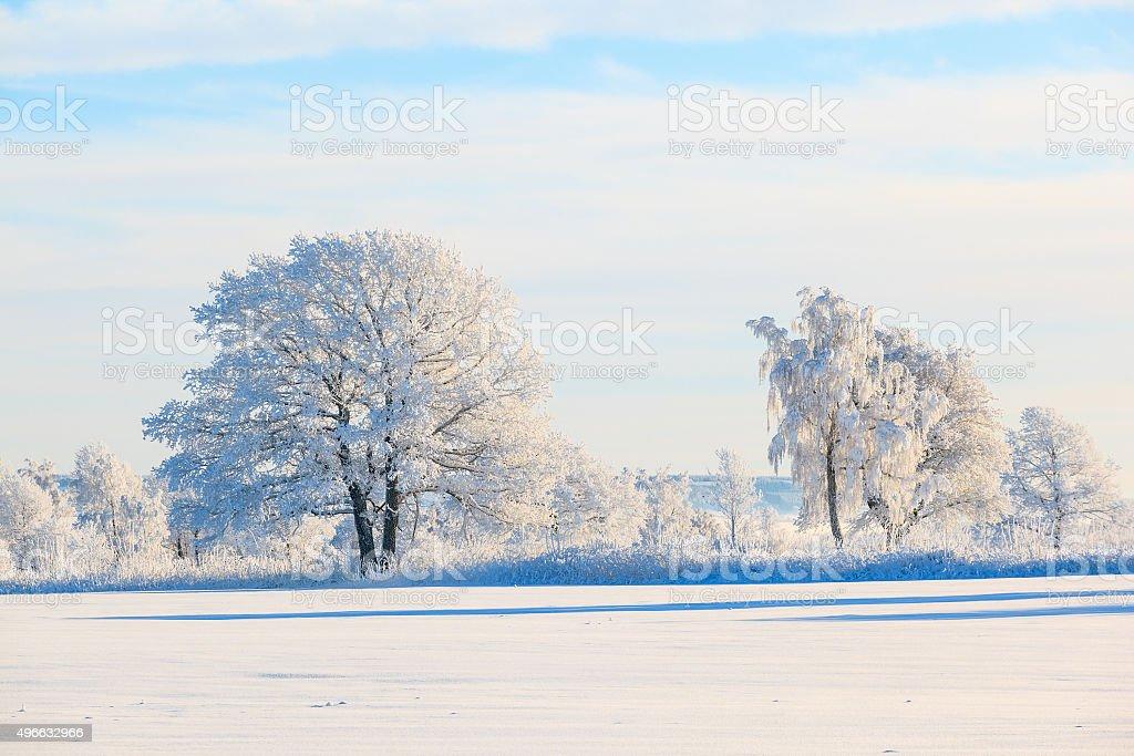 Frosty tree in snowy landscape stock photo