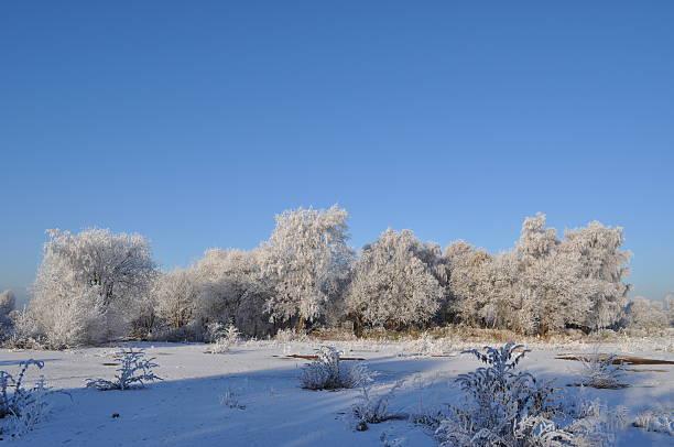 Frosty Tree Line stock photo