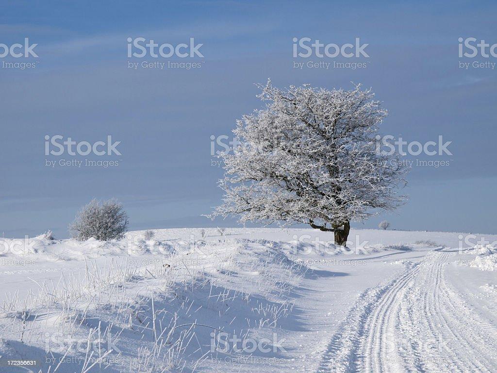Árbol de heladas foto de stock libre de derechos