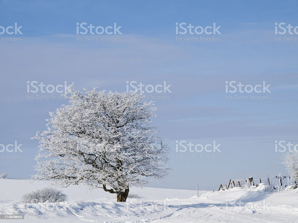 Frosty Tree royalty-free stock photo