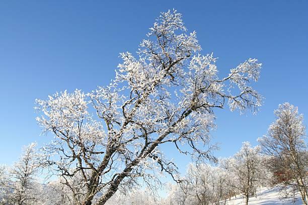 Frosty tree stock photo