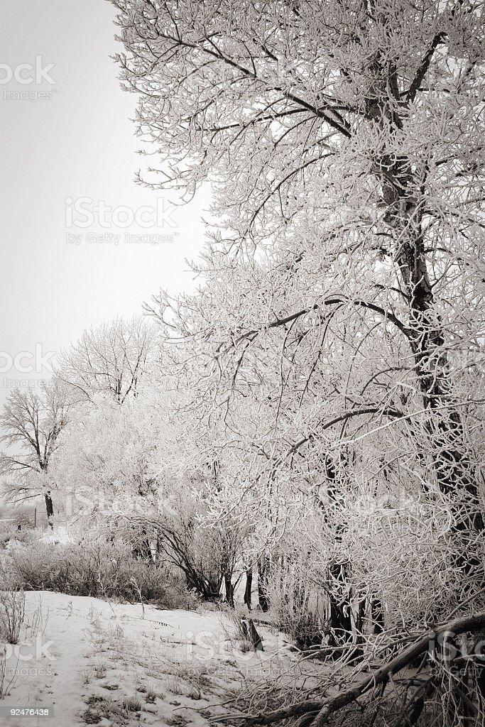 Frosty Trees royalty-free stock photo