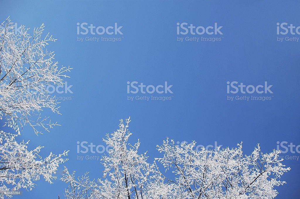 frosty trees snd sky royalty-free stock photo