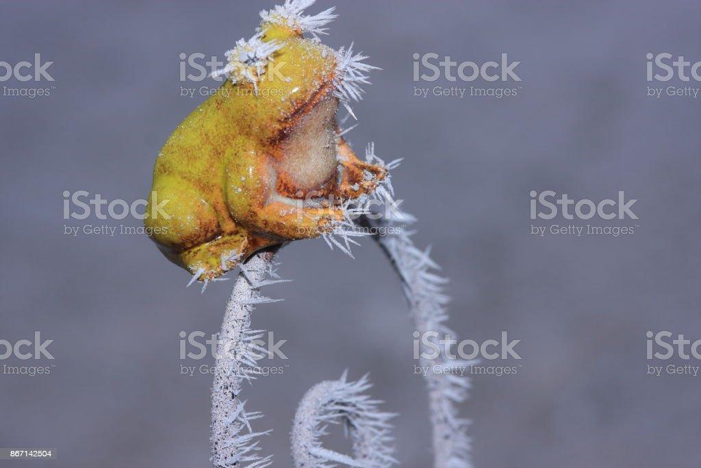 sapo tempo gelado na estação fria - foto de acervo