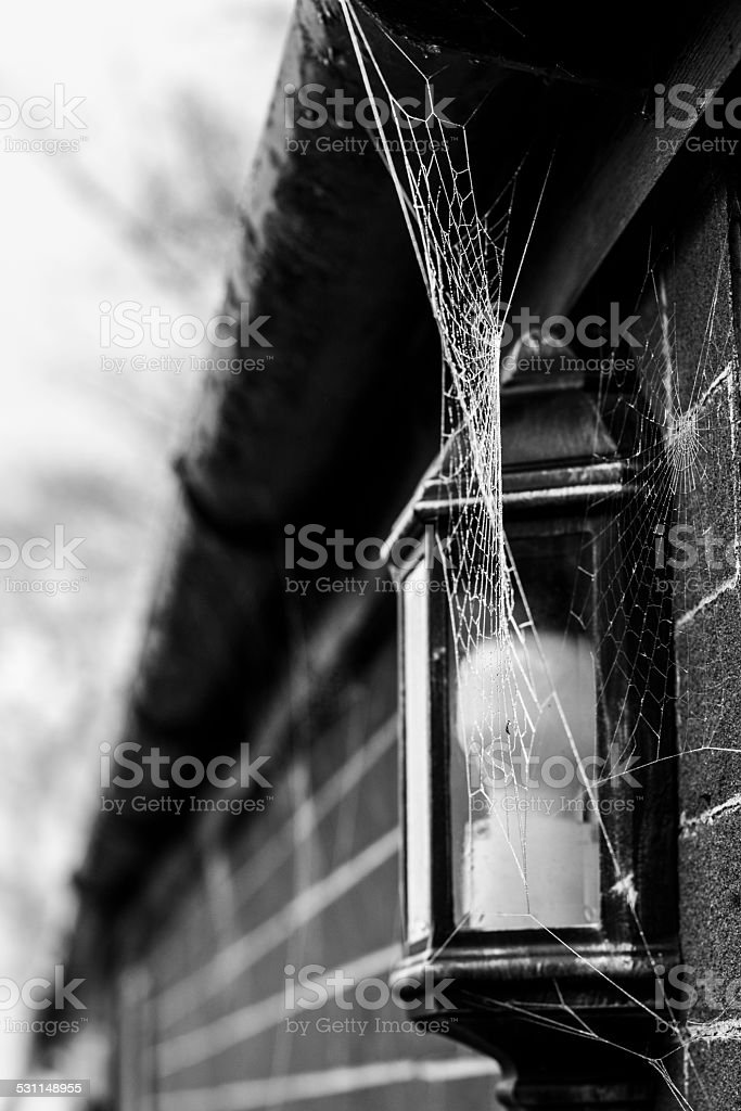 Frosty Web stock photo