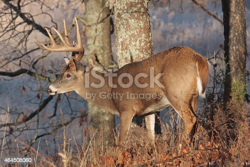 The early morning sun shines on this buck and melts the frost on his antlers.