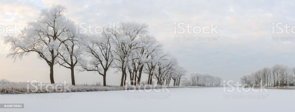 Frosty winter landscape with frozen trees during a beautiful day stock photo