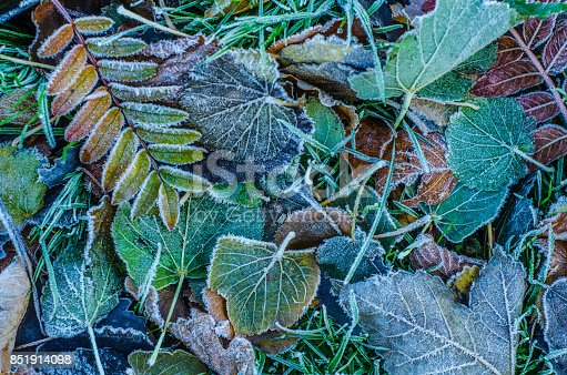 istock Frosty Winter Leaves 851914098