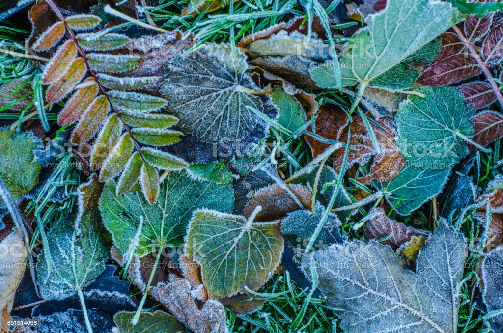 Frosty Winter Leaves stock photo