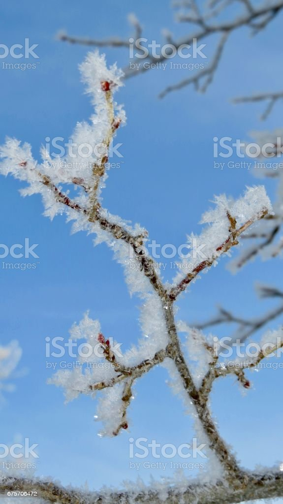 A frosty winter morning 免版稅 stock photo