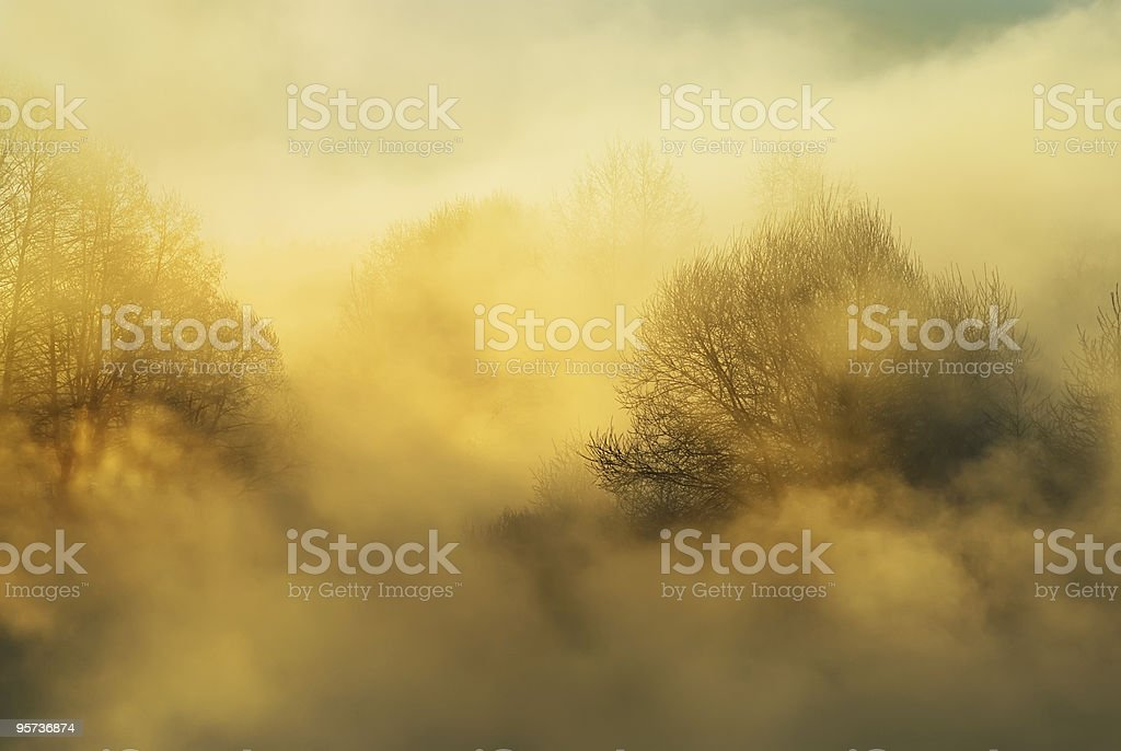Frosty winter morning royalty-free stock photo