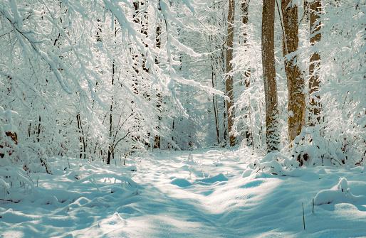 Beautiful sunlit winter landscape in Germany