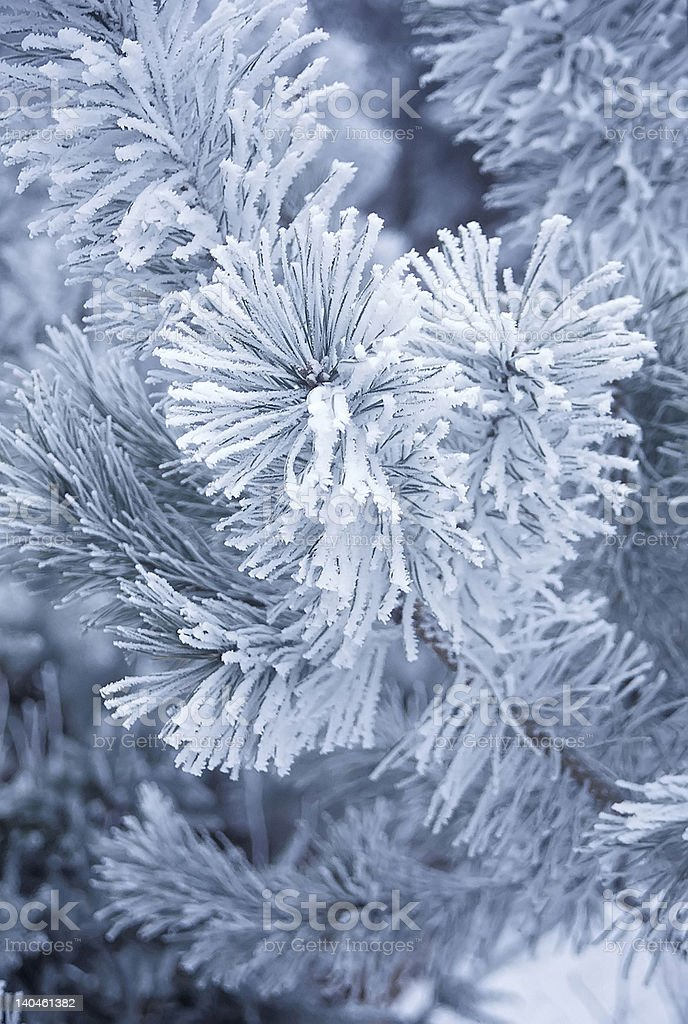 Frosty winter royalty-free stock photo