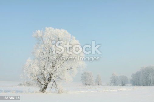 1034754000 istock photo Frosty winter tree in the morning 153736118