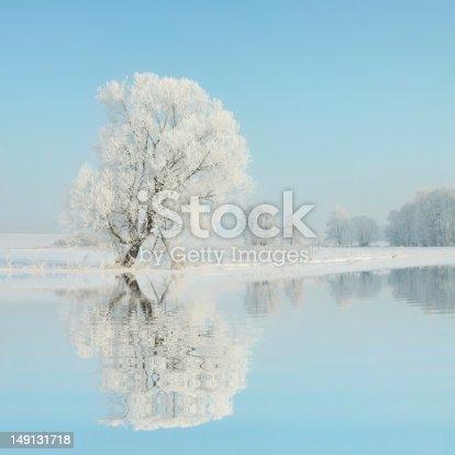 1034754000 istock photo Frosty winter tree 149131718