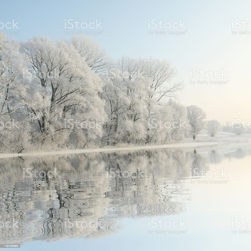 Frosty winter trees at dawn stock photo