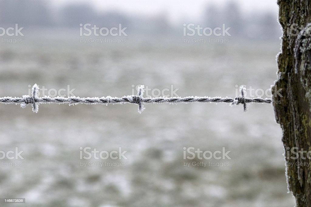 Frosty wire stock photo