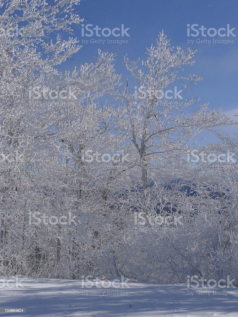 froze trees stock photo