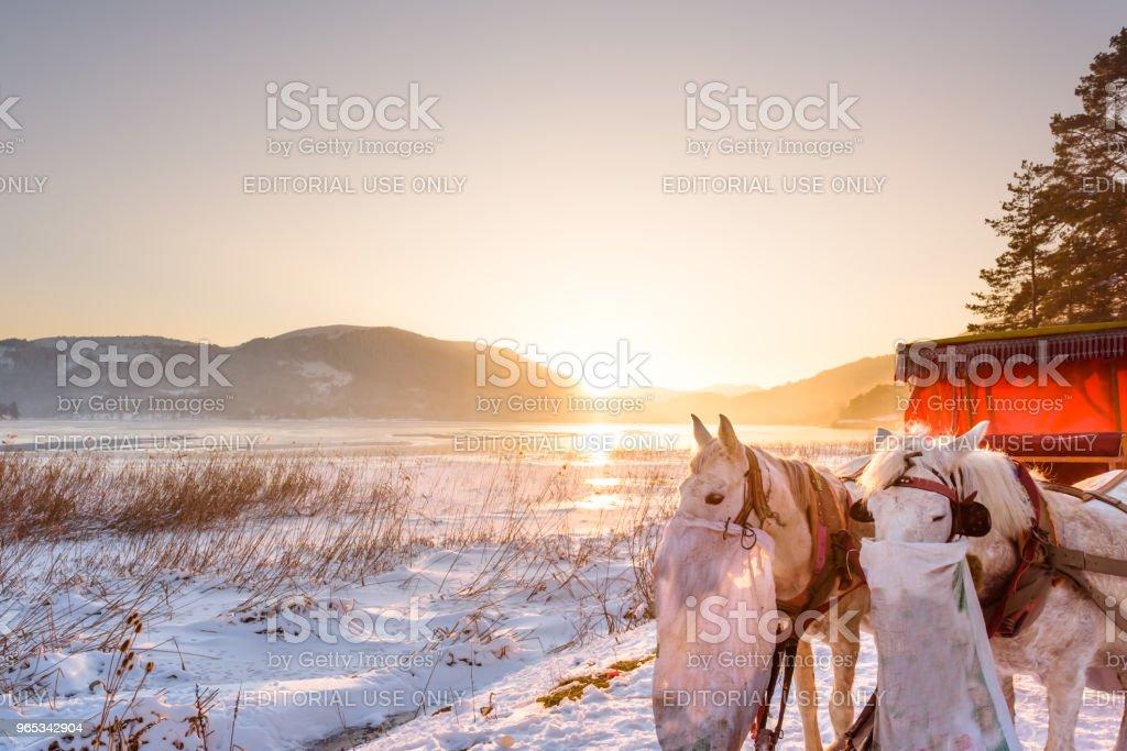 Frozen Abant lake in Golcuk National Park in Bolu,Turkey zbiór zdjęć royalty-free