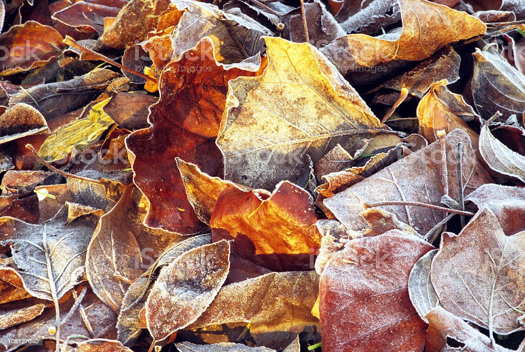 Frozen autumn leaves 3 royalty-free stock photo