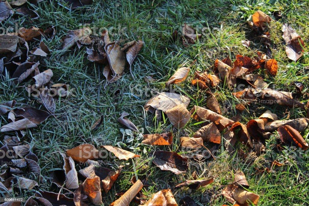 Frozen autumn leaves on the ground stock photo
