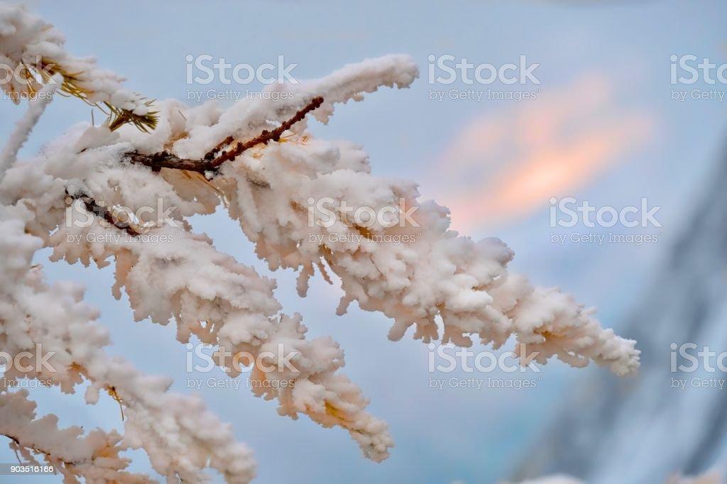 Gefrorenes Herbstlaub an den Bäumen Lärchen. Nord-Amerika. Pacific Northwest. Washington. Vereinigte Staaten von Amerika. – Foto