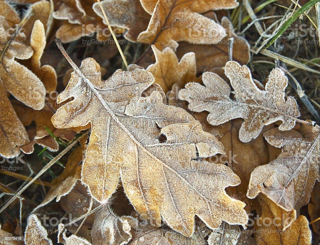 Frozen Herbst Blätter Lizenzfreies stock-foto