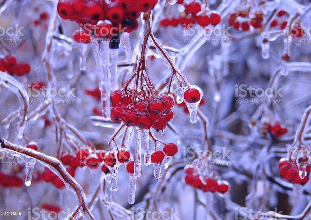 frozen berries blue royalty-free stock photo