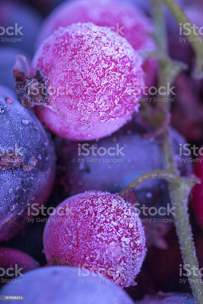 Frozen berries royalty-free stock photo