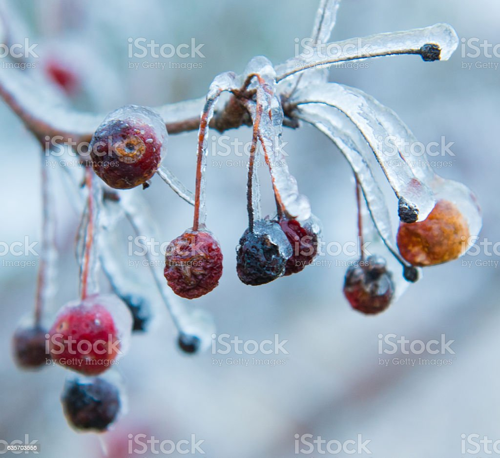 Frozen Berry royalty-free stock photo