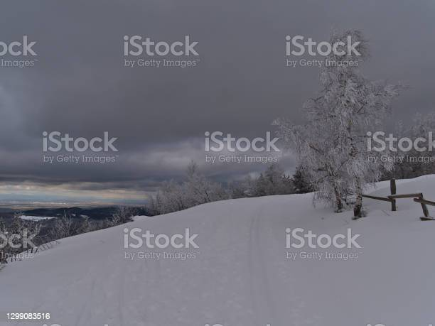 Photo of Frozen birch tree beside hiking path and cross-country ski trail on Schliffkopf peak, Germany with beautiful panoramic view over snow-covered Black Forest mountains.