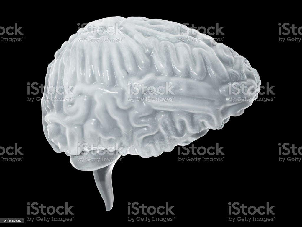 Frozen brain cryogenic concept. Cerebellum. Human brain freeze 3D illustration stock photo