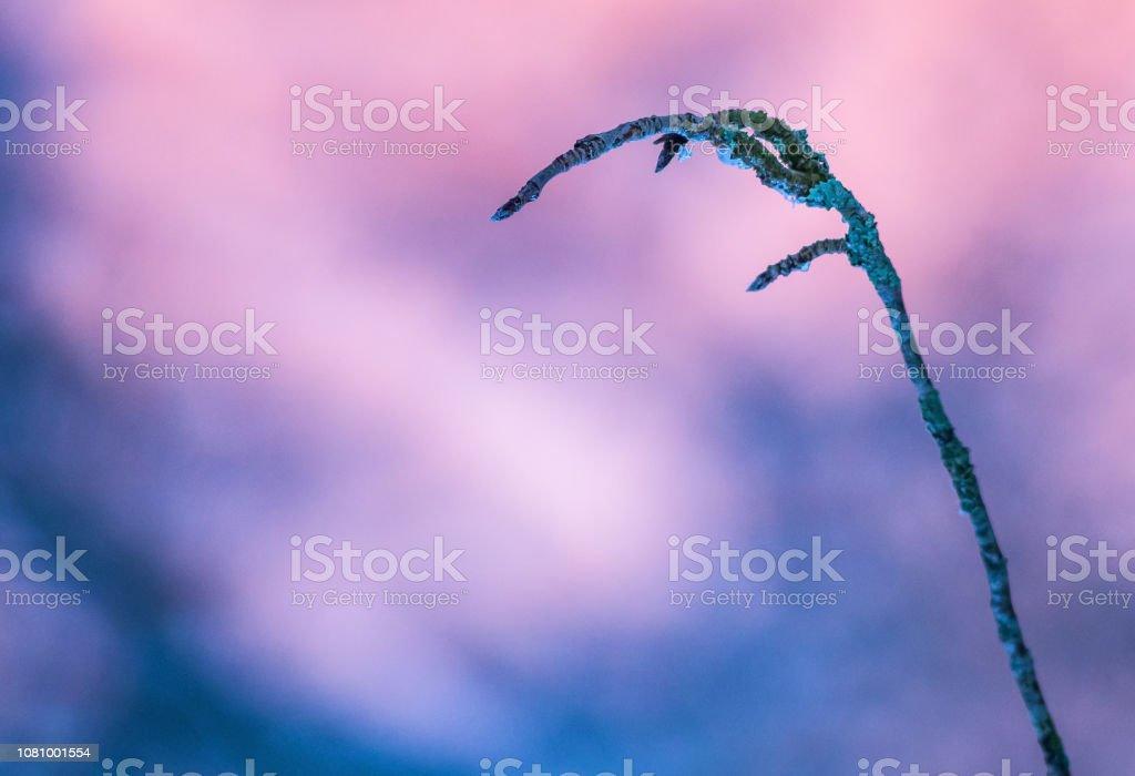 Frozen branch stock photo