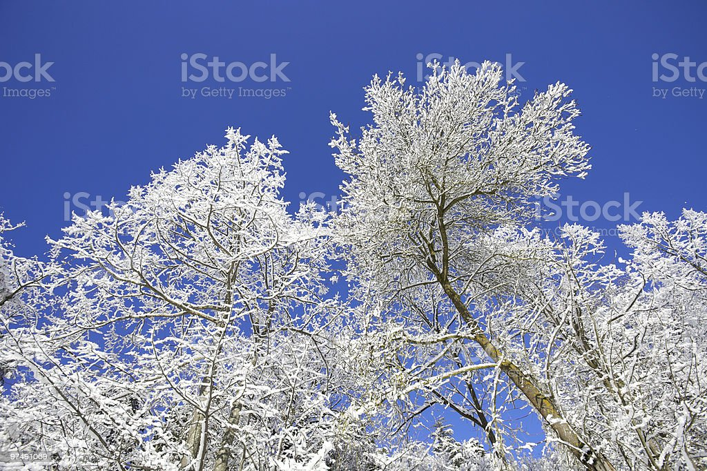 Frozen Branch royalty-free stock photo