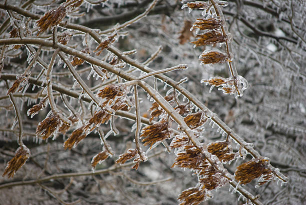 Frozen Branches
