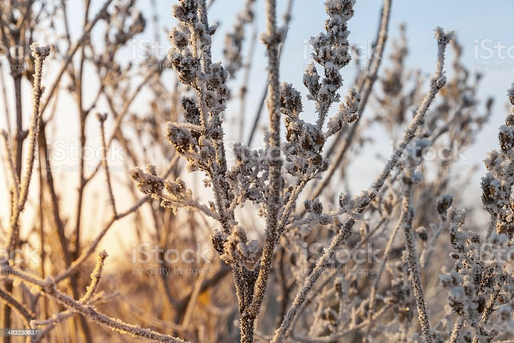 frozen branches royalty-free stock photo